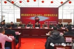 安徽肥东县苗木花卉协会成立一周年庆典